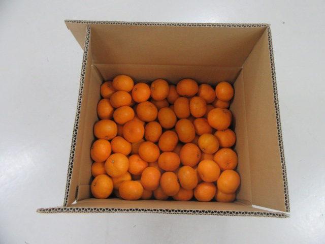 高知倉庫からみかんの贈り物&高知倉庫のご紹介